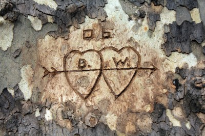 Carved Hearts in Tree Trunk