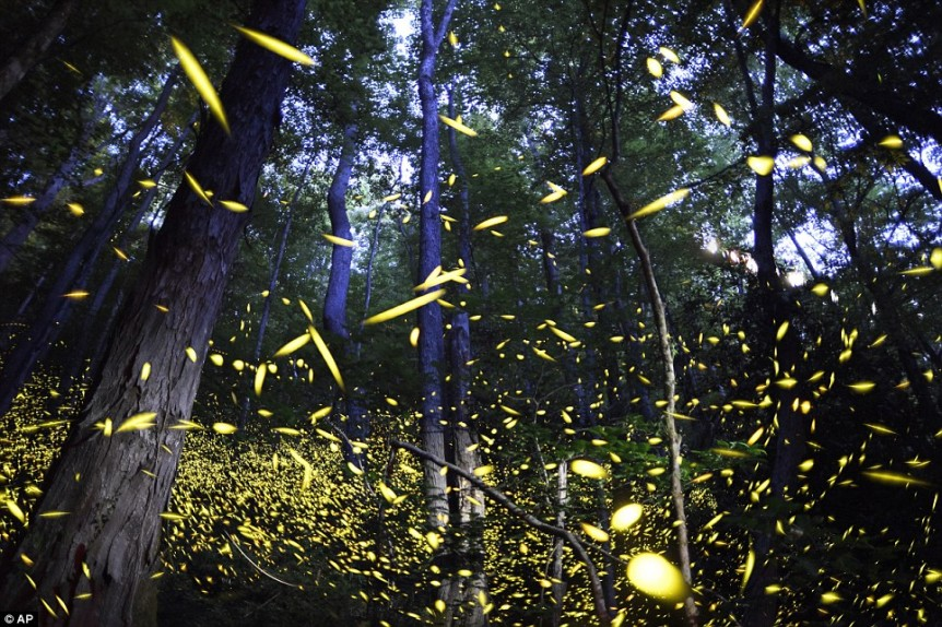 Fireflies glowing in forest article-2692070-1FA44B9900000578-241_964x642